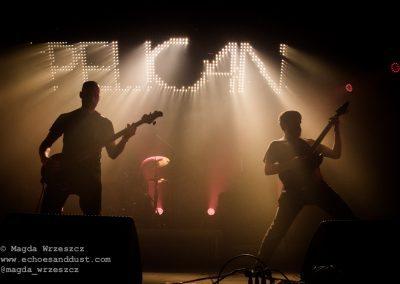 Pelican @ dnk16